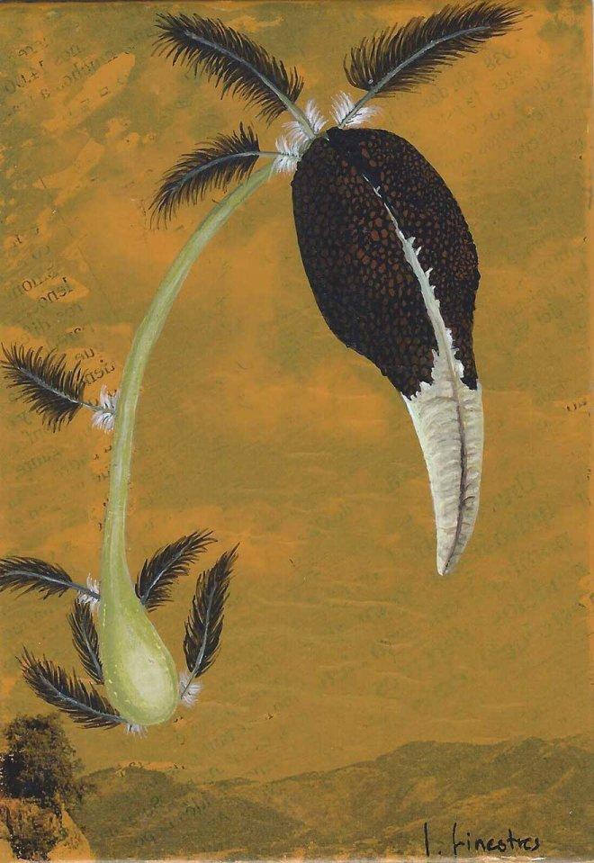 Flor ocell