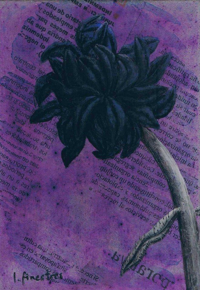 Flor negre